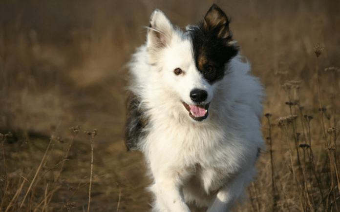 nutrition-tips-for-dog-breeders