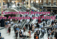 Connections Between the Amygdala and ADHD