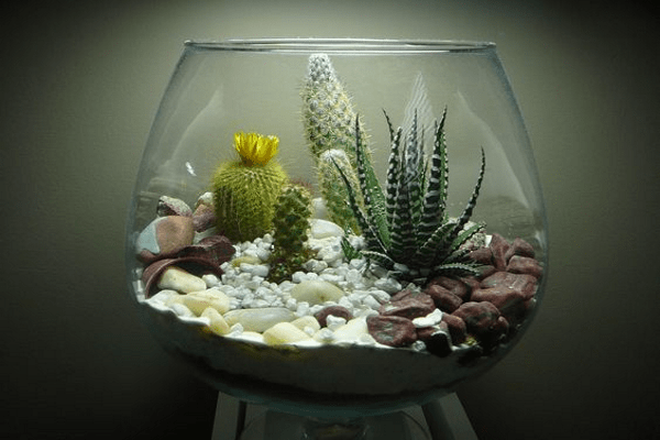 Cool Terrariums Home Decor Hacks