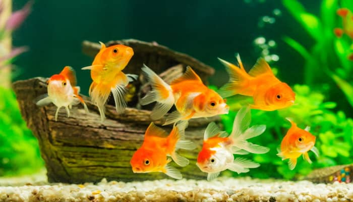 Right Temperature In An Aquarium Is So Important